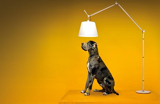 family light pin lighting keres beauty dish setup photography google s photo